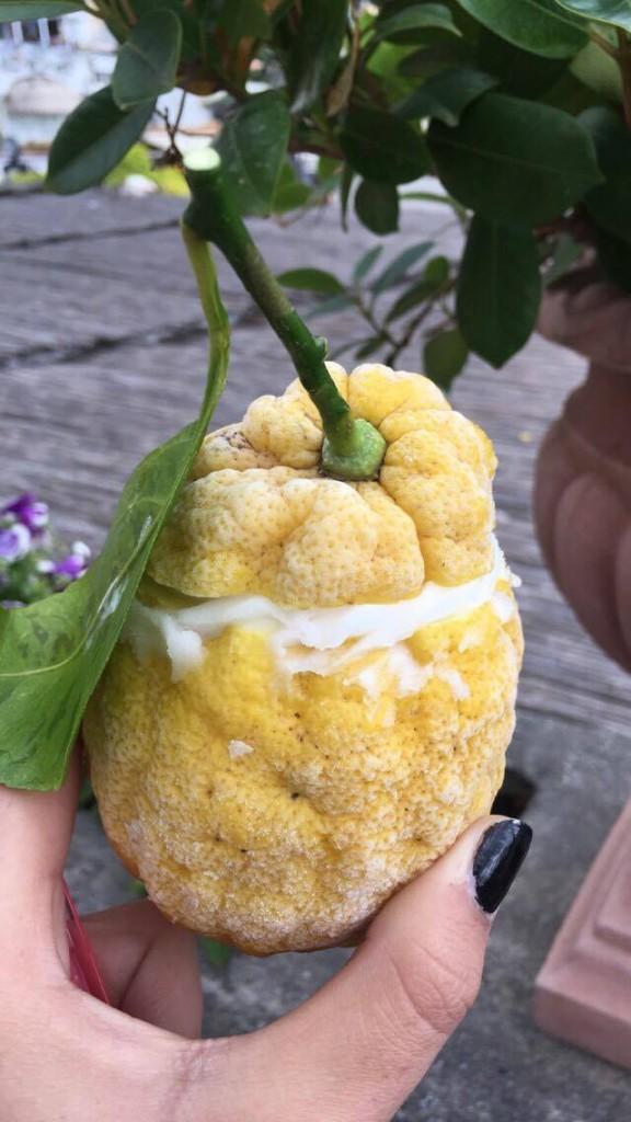 Lemon Sorbet from Covo Dei Saraceni, Positano
