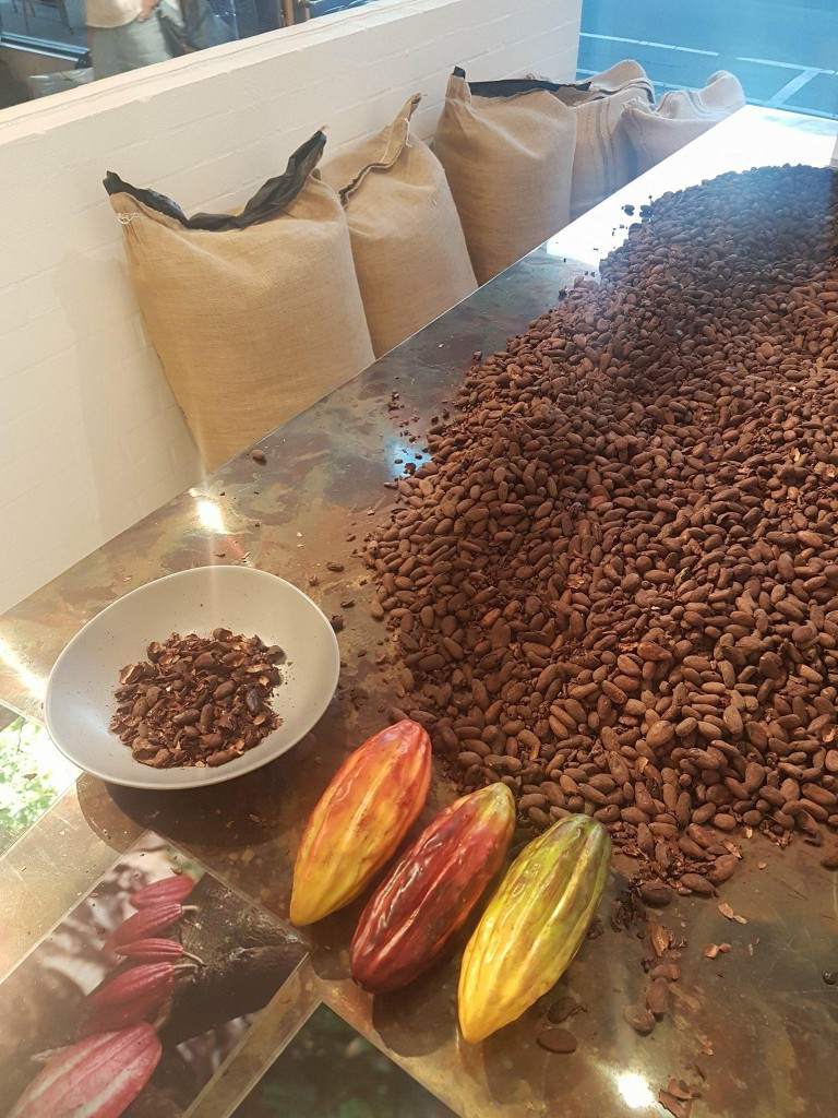 Cocoa beans - the start of the chocolate making process